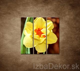 Narcis - detail